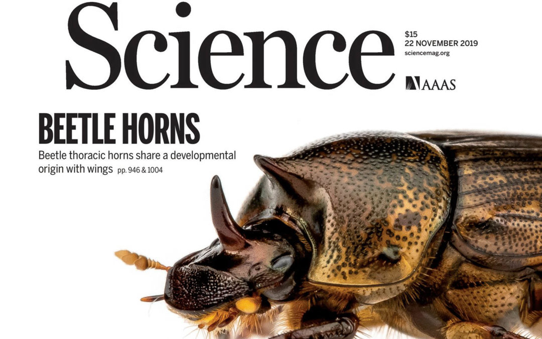 Beetle horns evolved from wing serial homologs (2019)